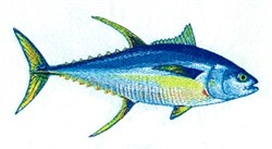 Yellowfin Tuna embroidery design