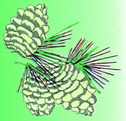 Pine Cones embroidery design