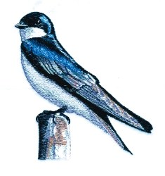 Tree Swallow embroidery design