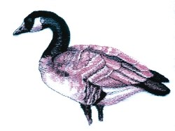 Canadian Goose embroidery design