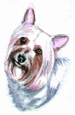 Silkie Terrier embroidery design