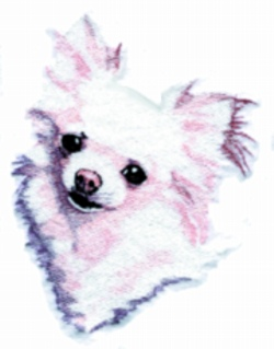 Long Coated Chihuahua embroidery design