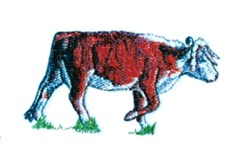 Steer embroidery design