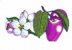 Apple & Apple Blossoms embroidery design