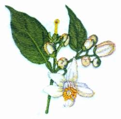 Orange Blossoms embroidery design