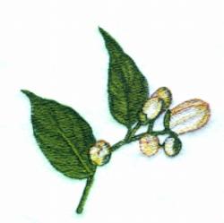 Orange Blossom Buds embroidery design