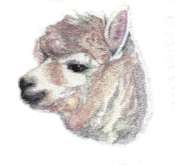 Alpaca embroidery design