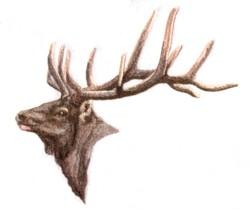 Small Elk Head embroidery design
