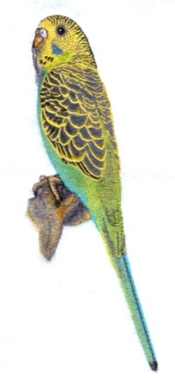 Green Budgie embroidery design