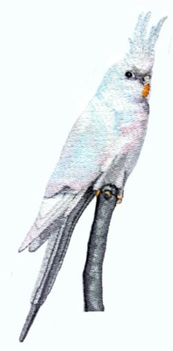 White Faced Cockatiel embroidery design