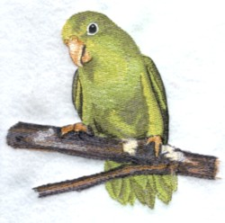 Green Rumped Parrotlet embroidery design
