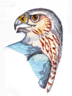 Coopers Hawk Head embroidery design