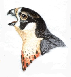Falcon Head embroidery design