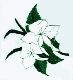 Hawaiian Flower embroidery design