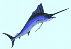 Large Marlin embroidery design