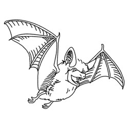 Bat Outline embroidery design