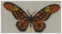 Long Wing Butterfly embroidery design