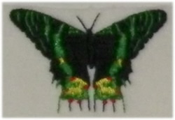 Green Butterfly embroidery design