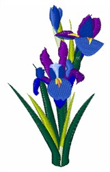 Bearded Iris embroidery design