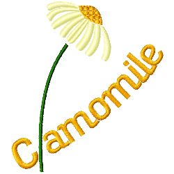 Camomile embroidery design