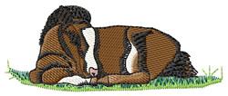 Miniature Pony   embroidery design