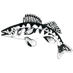 Walleye Outline embroidery design