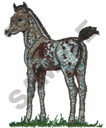 APPALOOSA FOAL embroidery design