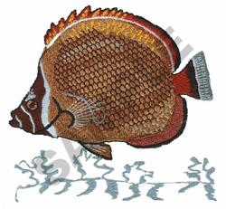 COLLARED CORAL FISH embroidery design