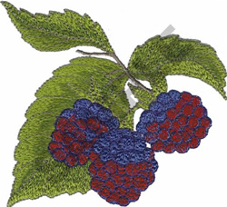 RASPBERRIES embroidery design