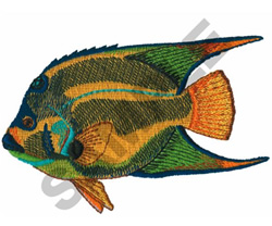 QUEEN ANGEL FISH embroidery design