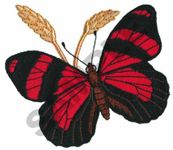 CATTAGRAMMA CYNOSURA embroidery design