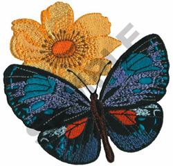 EUPLOEA CALLITHAE HANSEMANNI embroidery design