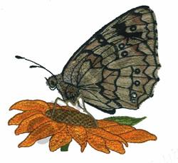 MELANARGIA GALATHEA embroidery design