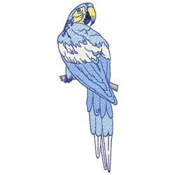 Macaw embroidery design
