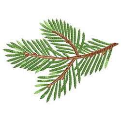 Pine Tree Branch embroidery design