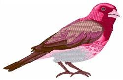 Purple Finch embroidery design