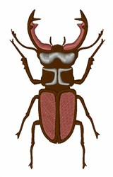 Stag Beetle   embroidery design