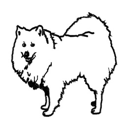 Spitz embroidery design