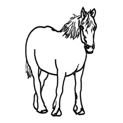 Palomino Outline embroidery design