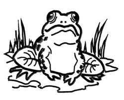 Frog Outline embroidery design