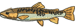 Brown Trout embroidery design