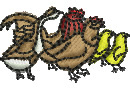 Poultry embroidery design