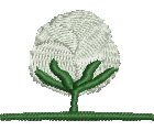 Cotton Boll embroidery design