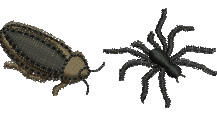 Cockroach and Spider embroidery design