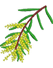 Wattle embroidery design