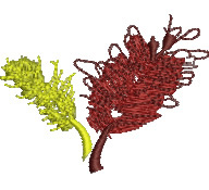 Grevillia embroidery design