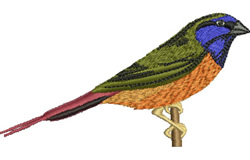 Finch embroidery design