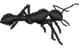 Ant embroidery design