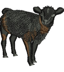 Baby Calf embroidery design