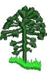 Norfolk Pine Tree embroidery design